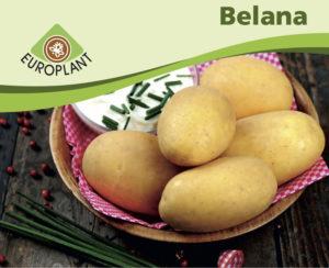 Belana als Teilnehmerin zur Thüringer Kartoffel des Jahres 2016