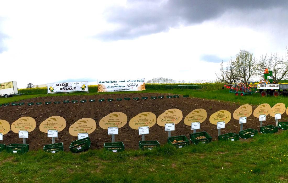 Kartoffellegen in Heichelheim 2016
