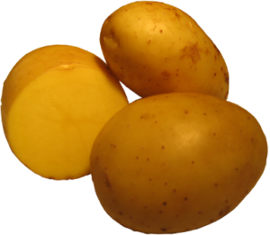 Wega- Teilnehmerin zur Thüringer Kartoffel des Jahres 2016